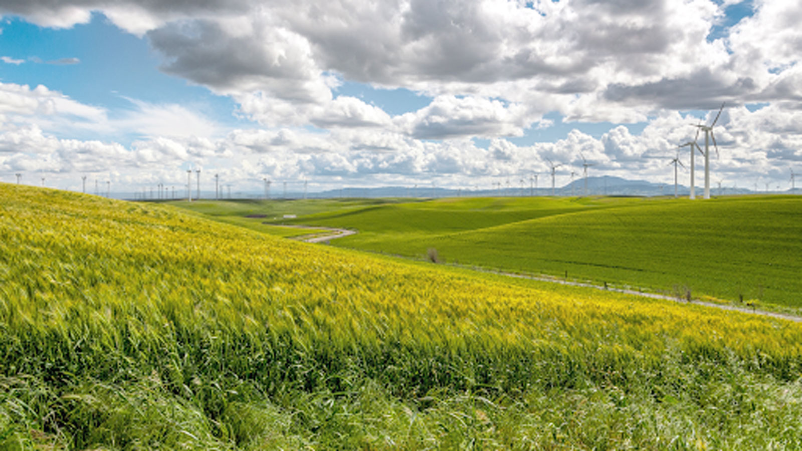 """<h4>CLEAN ENERGY & GLOBAL WARMING</h4><h5>We're calling for the expansion and extension of clean energy tax credits.</h5><div><a style=""""padding: 8px 15px 10px 10px; font-family: 'open_sansbold' !important; color: #fff; border: none; border-radius: 5px; background-color: #FF0000;"""" href=""""https://environmentamerica.webaction.org/p/dia/action4/common/public/?action_KEY=42202"""">TAKE ACTION</a></div><em>WestBoundary Photography Chris Gill</em>"""