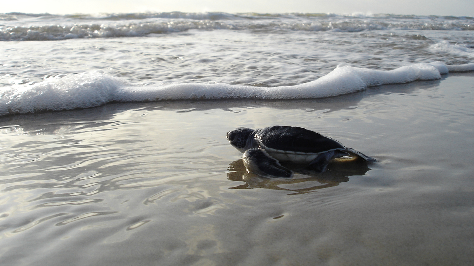 <h4>OUR OCEANS</h4><h5>We're working to keep beaches and coastal wildlife along 90% of America's coastline safe from new offshore oil and gas drilling.</h5><em>National Park Service</em>